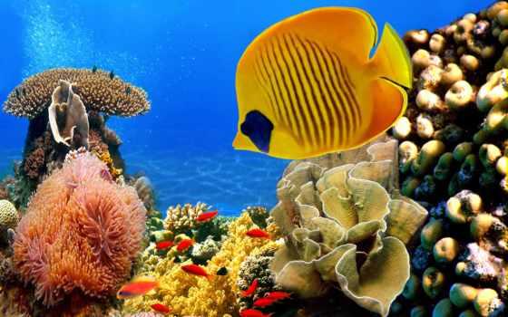 underwater, world, красного, моря, море, фотографа, глазами,