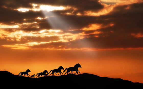 лошадь, лошади, закат, zhivotnye, небо, горы, horses, organic,