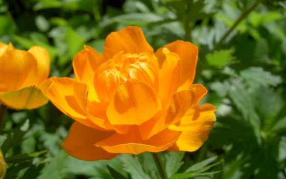 цветок, желтый Фон № 2128 разрешение 1920x1080