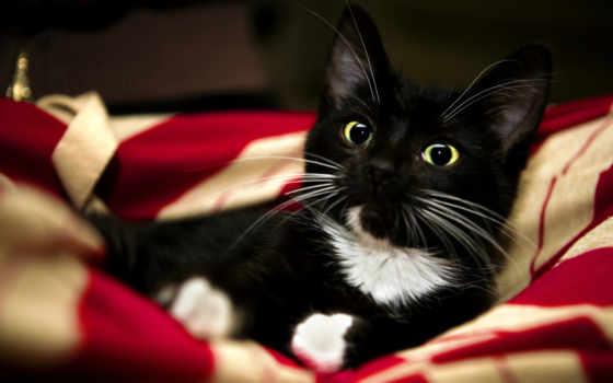 cat, cats, animals, domestic, котенок, красный, картинка, взгляд, net, животные, black, animal, pet, животное, hd, wallpapers, html, white,