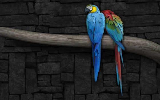 ветка, попугай