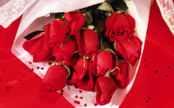 cvety, розы, красные