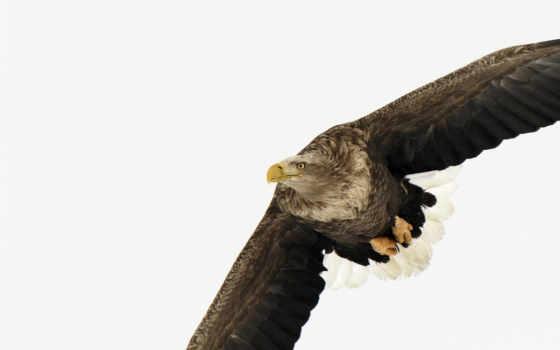 орлан, flying, возможность, закачки, форматы, самая, большая, everything, коллекция, качественная,