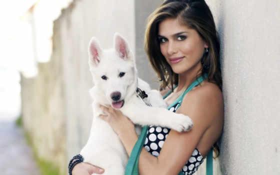 собака, dogs, bengaluru, pets, details, овчарка, производитель, german, karnataka,