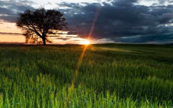 природа, поле, sun, небо, дерево, winter, снег, rays,