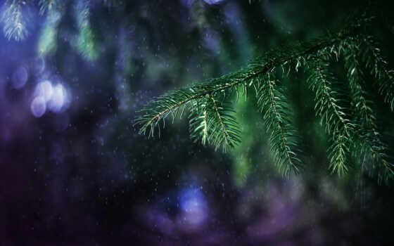 branch, дождь, огонь, дерево, свет, елка, mac, еловый, спине