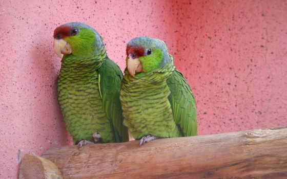 попугаи, животные Фон № 6415 разрешение 1600x1200