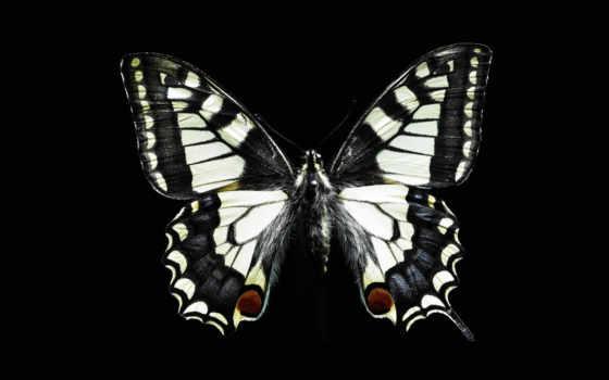 бабочка Фон № 653 разрешение 1920x1200