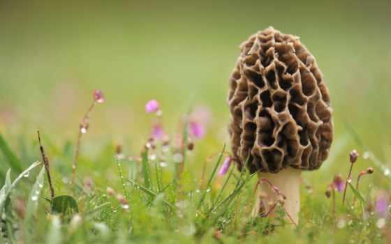 mushrooms, morel, mushroom
