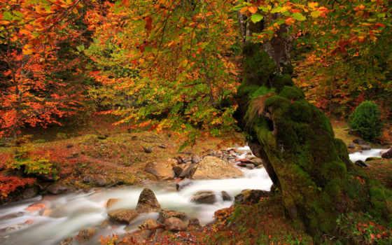 осень, природа, река