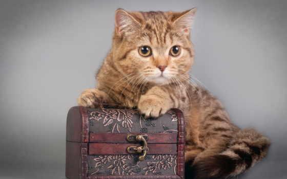 кошки, зарегистрируйтесь, войдите