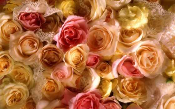 розы, cvety, роз