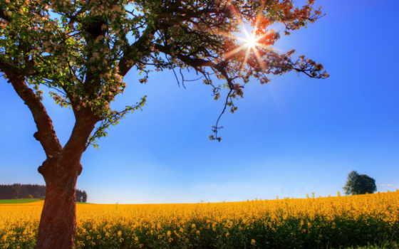 картинка, солнца, лучи, города, sveta, небо,