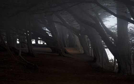 мрачные, trees, darkness