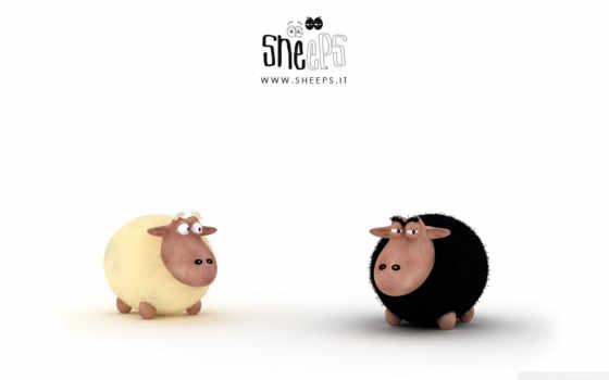 sheep, black, white