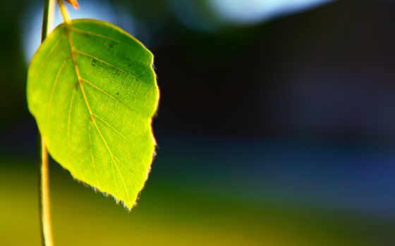 макро, depth, flora, поле, листья, plants,