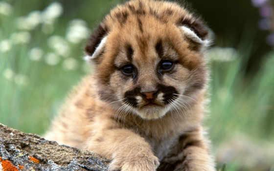 baby, animals