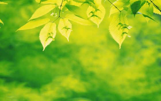 green, leaves Фон № 23984 разрешение 1680x1050
