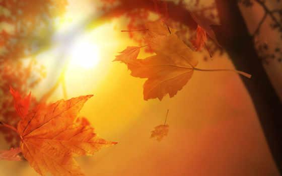 листья, autumn