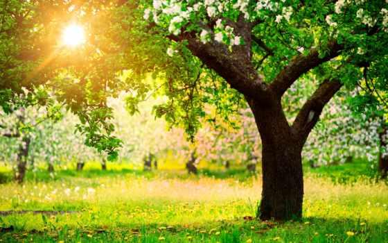 apple, рисунок, весна