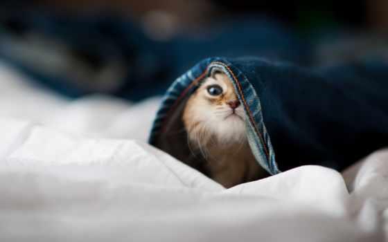 котенок, котенка, выглядывает