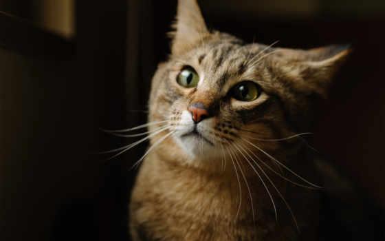 кот, котэ, морда, ус, кошки, рисунки, лежит, red,
