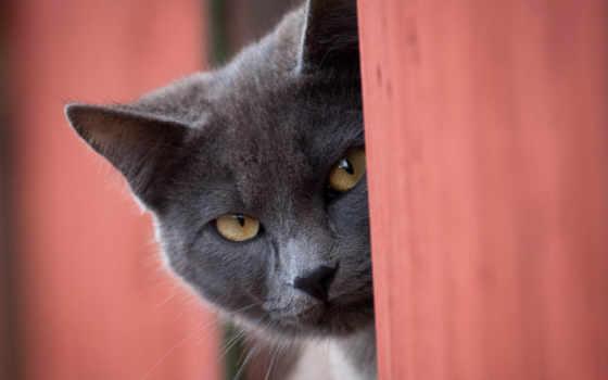 mitsubishi, gatito, gato, gatos, pajero, владельца, сказ, поколение, pinterest, спорт,
