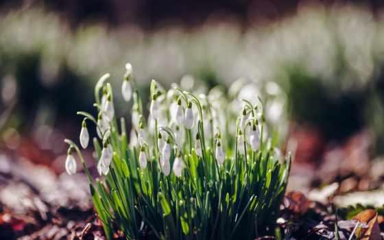 весна, cvety, tochka, oboi, прикольные,