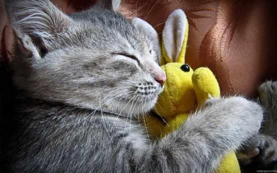 тюлень, кот, спать