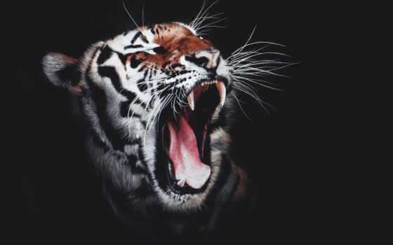 тигр, animal, print, картинка, white, jetset, black, decoration, стена, canvas, фон