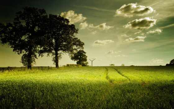 природа, поле, landscape