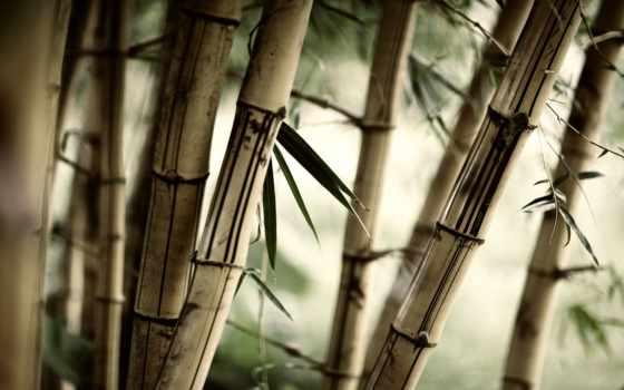 шлейф, sf, бамбук,