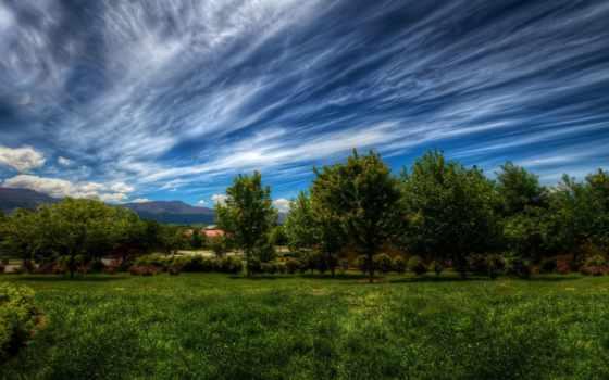 trees, небо, природа