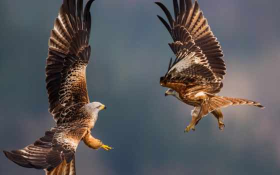 national, geographic, animal, природа, птица, зелёный, water, animals, отражение,