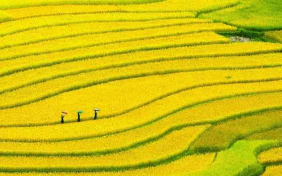 juno, рис, терасса, vietnam, arévalo, себастьян, музыка,