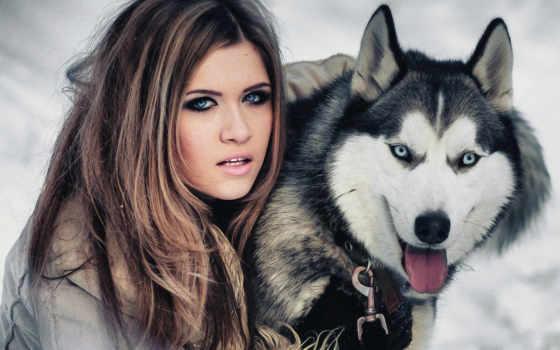 zhivotnye, страница, голубые, свет, хаски, красивые, девушка, собака,