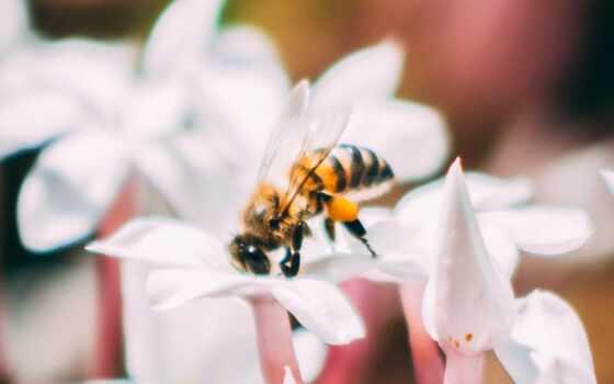 пчелка, цветы, насекомое, глаз, гладь, bloom