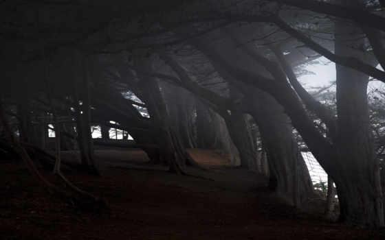обои, природа, совершенно, категория, quot, лес, т