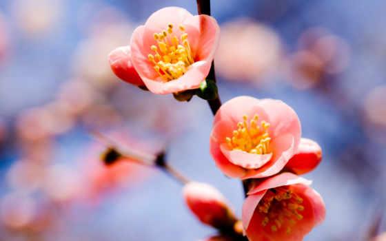 цветы, ветка Фон № 23901 разрешение 2560x1600