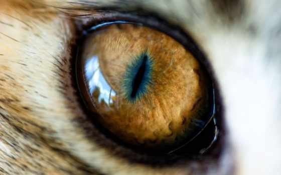 ojos, leopardo, imagenes