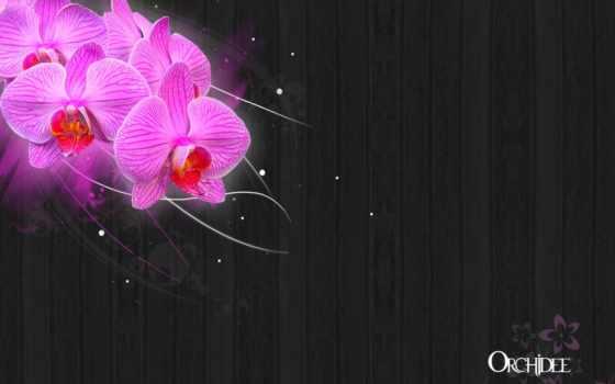 orchideen, orchidee, desktop