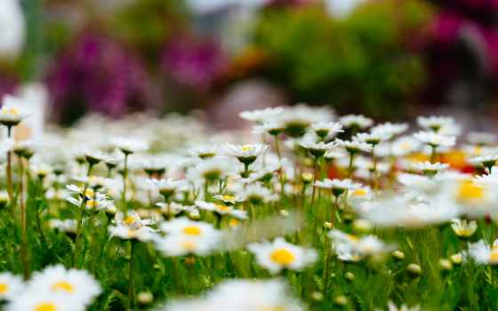 краю, берёзовом, цветы