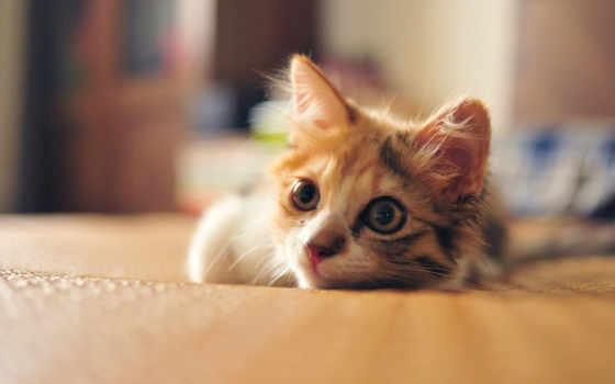 котенок, кот, смотреть