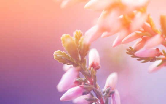 макро, цветы, природа