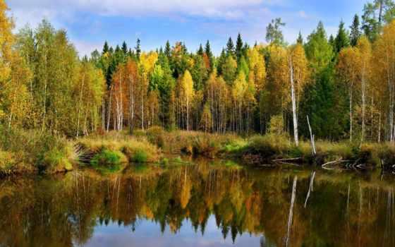 осень, пейзажи -, осенние, лес, landscape, пруд, природа, pictures,