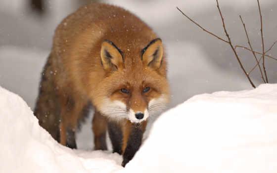 зимой, звери, zhivotnye, life, winter, лесу, video, но, looking,