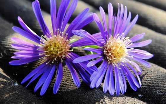 бутоны, cvety, flowers, desktop, samsung, galaxy, pinterest,
