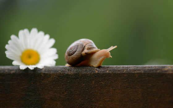 snail, улитки, цветы, ромашка, привлекательно, pinterest,