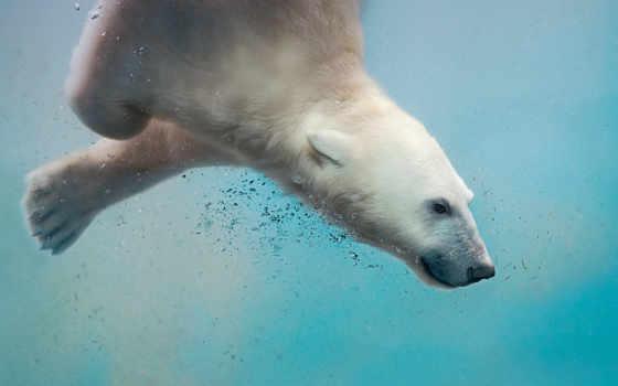 медведь, views, you, медведи, декабрь, windows, под, белые, водой, можно, polar,