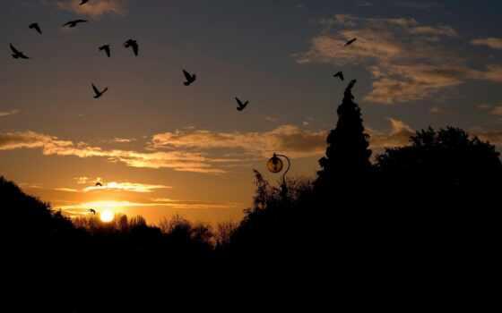 природа, россия, птица, bir, красивый, free, биг, shirokoformatnyi, небо, закат